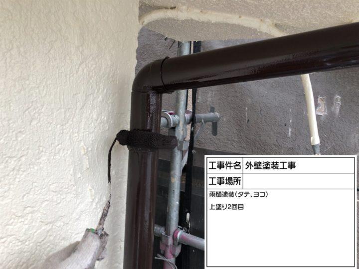 雨樋塗装③